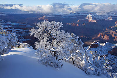 Grand Canyon Photograph - Winter Wonder by Mike Buchheit