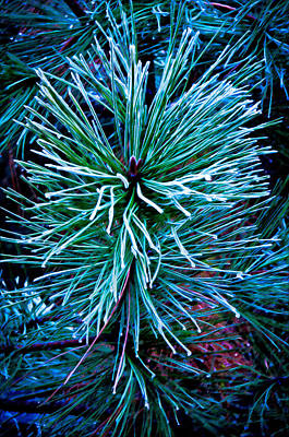Frozen Pine Needles  Art Print by Connie Cooper-Edwards
