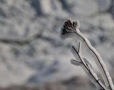 Photograph - Frozen Plant by Perggals - Stacey Turner