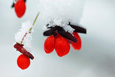 Photograph - Frozen Red Fruit by Debbie Oppermann