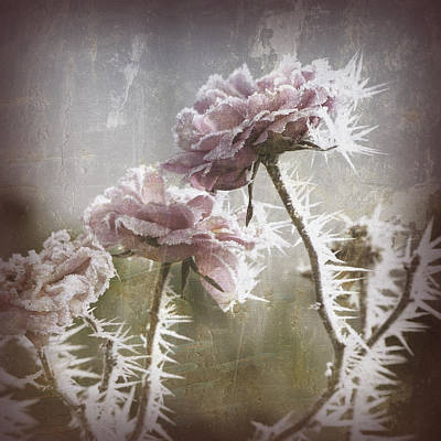 Frozen Roses Art Print by Bonnie Bruno