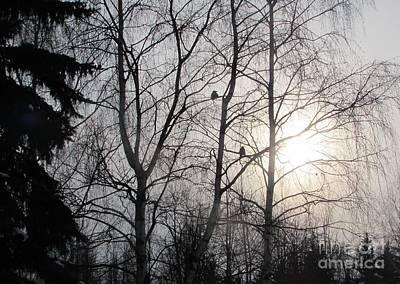 Photograph - Frozen Sky by Anna Yurasovsky