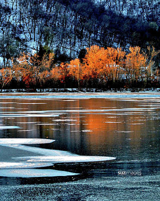 Photograph - Frozen by Susie Loechler