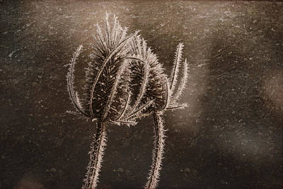 Photograph - Frozen Thistles In Snow  by Wes and Dotty Weber