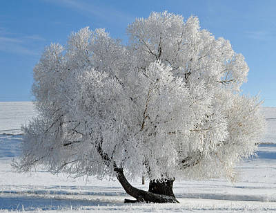 Gallatin Photograph - Frozen Tree by Bruce Gourley