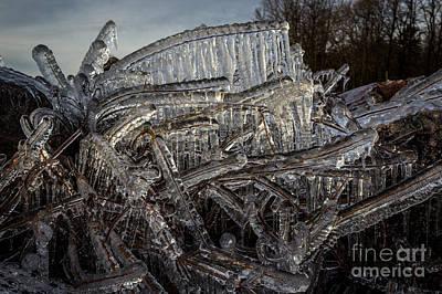 Wall Art - Photograph - Frozen Tree by Marj Dubeau
