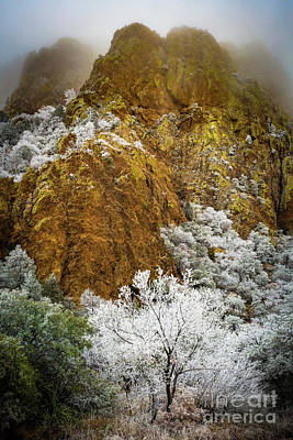 Big Bend Wall Art - Photograph - Frozen Trees by Inge Johnsson