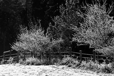 Photograph - Frozen Trees by Inge Riis McDonald
