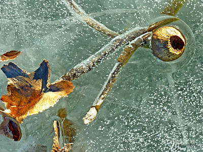 Photograph - Frozen Water Lily by George Tuffy