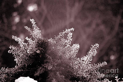Photograph - Frozen - Winter In Switzerland by Susanne Van Hulst