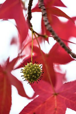 Photograph - Fruit Of The Season 2 by Jonathan Nguyen