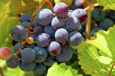 Photograph - Fruit Of The Vine by Steve Stuller