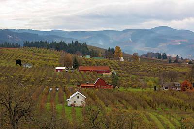 Farmland Photograph - Fruit Orchard Farmland In Hood River Oregon by David Gn