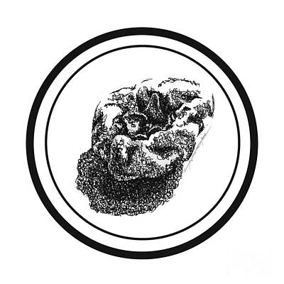 Catherine White Drawing - Fruit by Roa Malubay