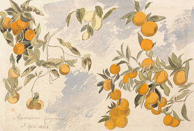 Drawing - Fruit Trees, 3 April 1863 by Edward Lear