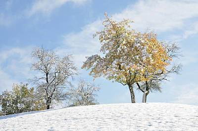 Photograph - Fruit Trees In Autumn Leaves Covered By Early Snow by Martin Stankewitz