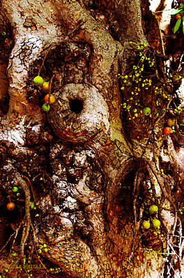 Photograph - Fruitful Tree by Susan Vineyard