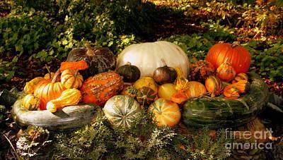 Photograph - Fruits Of Fall by Jennifer E Doll