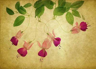 Hanging Basket Photograph - Fuchsia #1 by Rebecca Cozart