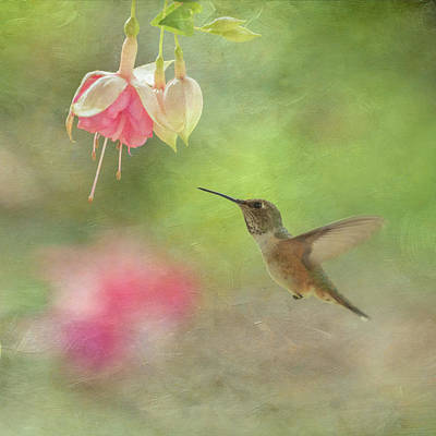 Photograph - Fuchsia And Hummingbird by Angie Vogel