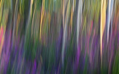 Fuchsia At Dawn Art Print