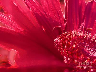 Photograph - Fuchsia Flower by Eve Penman