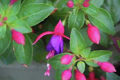 Painting - Fuchsia Flower-painted 8728 by Ericamaxine Price