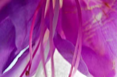 Fuchsia Art Print by Jean Booth