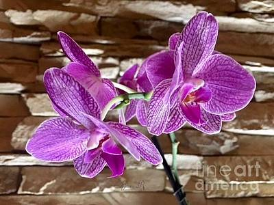 Photograph - Fuchsia Orchids by Jeannie Rhode