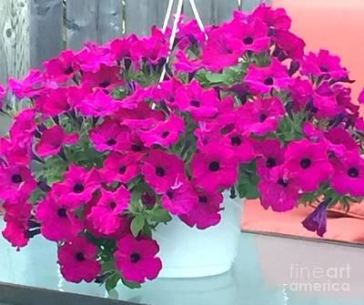 Photograph - Fuchsia Petunias by Barbara Griffin