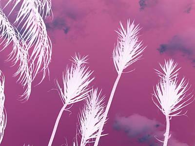 Photograph - Fuchsia  Spurts by Florene Welebny