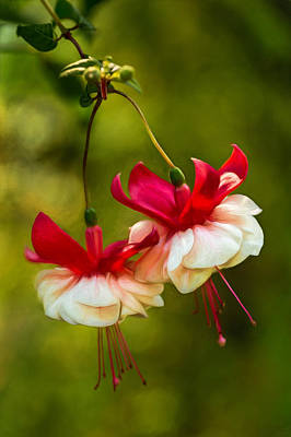 Photograph - Fuchsia Twins  by Mary Jo Allen