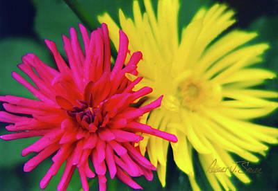 Photograph - Fuchsia Yellow Spider Chrysanthemums 4 by Robert J Sadler