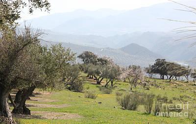 Photograph - Fuentes De Cesna Granada 1 by Jackie Mestrom