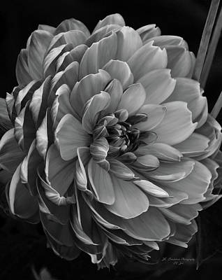 Photograph - Full Glory In Black And White by Jeanette C Landstrom