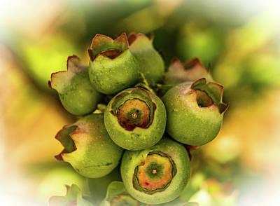 Photograph - Full Green Blueberries Ready For Ripening by Douglas Barnett