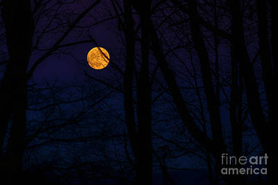 Photograph - Full Moon And Belt Of Venus by Thomas R Fletcher