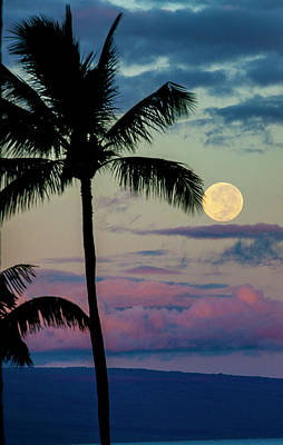 Full Moon And Palm Trees Art Print