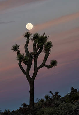 Photograph - Full Moon At Joshua Tree National Park by Loree Johnson