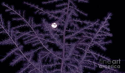 Photograph - Full Moon Christmas 2015 by Marlene Rose Besso