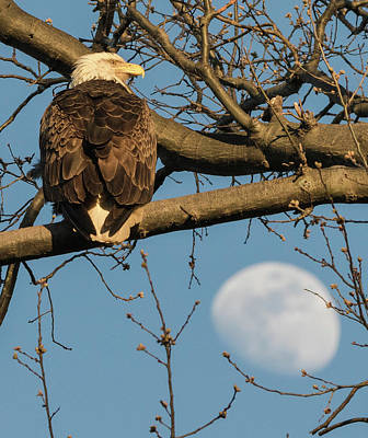 Photograph - Full Moon Eagle  by Richard Kopchock