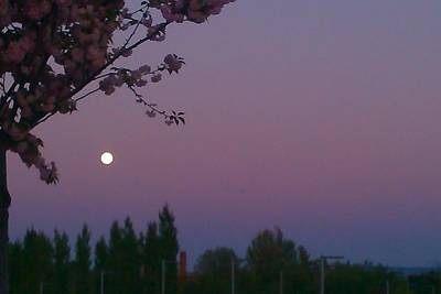 Photograph - Full Moon Evening by Nieve Andrea