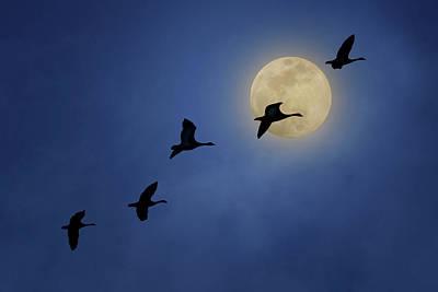Photograph - Full Moon - Geese by Nikolyn McDonald