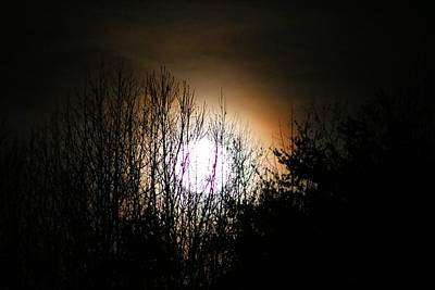 Photograph - Full Moon In Tree Branches by Kathryn Meyer
