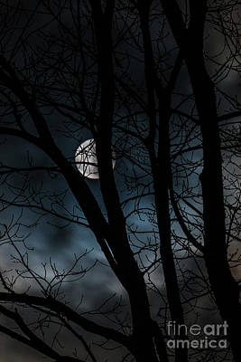 Photograph - Full Moon by Mim White