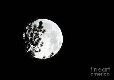 Photograph - Full Moon On La Veta Pass by Jim Garrison