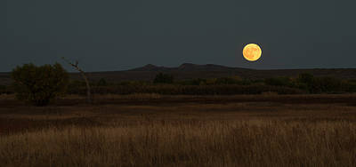 Photograph - Full Moon Over Bosque Del Apache by Loree Johnson