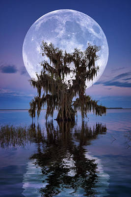 Photograph - Full Moon Over Cypress Tree On Lake Istokpoga In Lake Placid, Florida. by Justin Kelefas