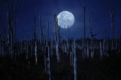 Photograph - Full Moon Over Dead Cypress Trees by Justin Kelefas