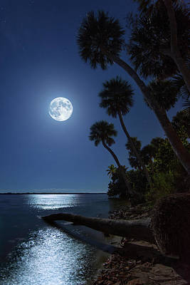 Photograph - Full Moon Over Fallen Palm At Indian River Park In Stuart Florida by Justin Kelefas